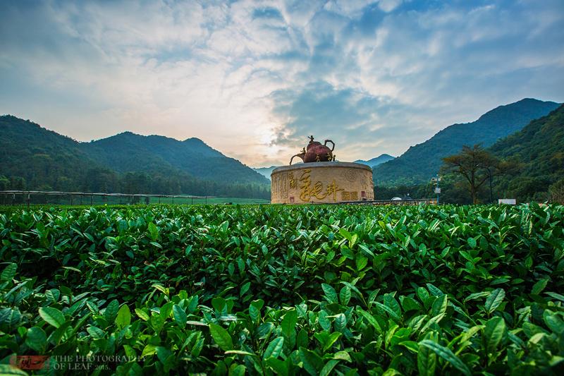龙坞茶镇1.jpg