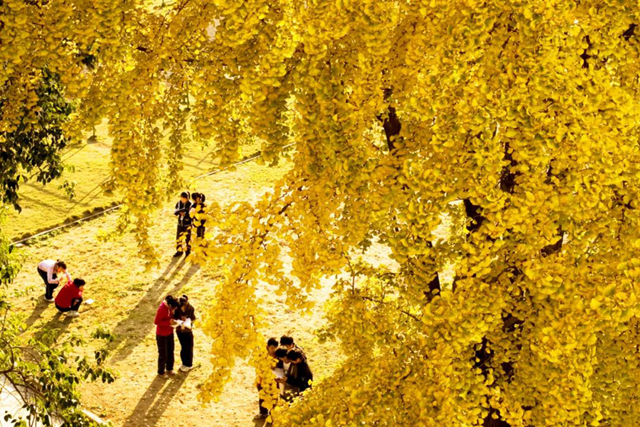 Autumn map in Fuyang