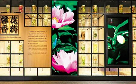 Zhejiang Chinese Medicine Museum