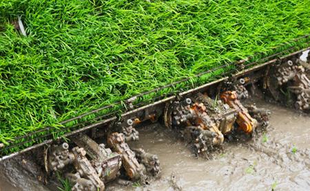 Technology facilitates spring plowing in Chun'an