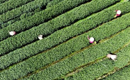 China International Tea Expo