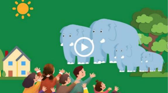 A baby elephant's travel diary