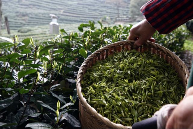 Digital technology key to Hangzhou's rural revitalization