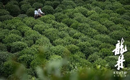 Zhejiang authorities recommend film inspired by Longjing tea