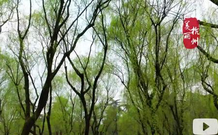 Hangzhou Eye episode 79: The inheritor of Jingshan tea